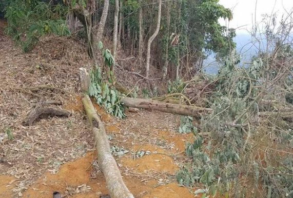 Homem de 44 anos morre após árvore cair sobre sua cabeça, em Rondônia