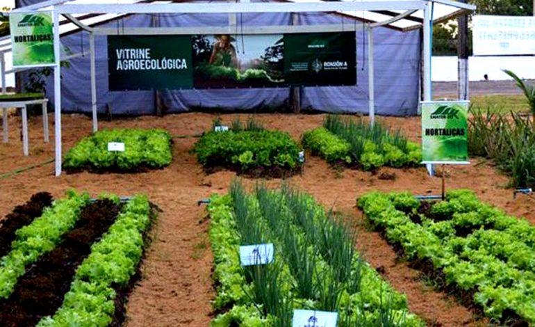 Evento online vai debater a produção e comercialização de produtos na 3ª Semana de Agroecologia em Rondônia