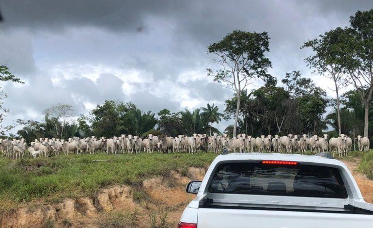 QUINTA RODA II: PF faz operação contra o tráfico interestadual e bloqueia R$ 36 milhões de bando