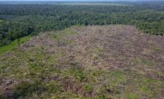 Agricultor é multado em R$ 140 mil por desmatar 37 hectares de floresta em Rondônia