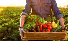 Setor produtivo da Gleba G tem a maior produção de hortifrutigranjeiros de Ji-Paraná