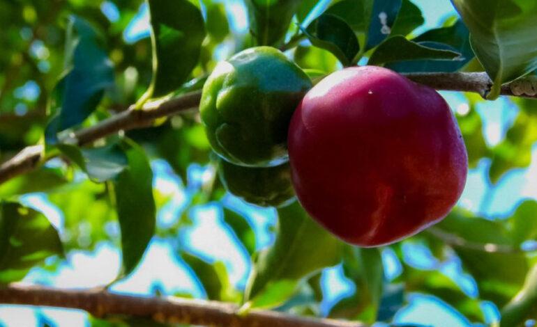 Mais de 70 agroindústrias familiares de Rondônia trabalham com a produção de polpa de frutas