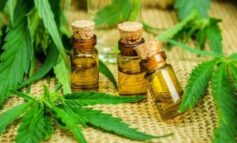 SAÚDE: Decisão do Tribunal de Justiça de RO garante uso medicinal da maconha no Estado