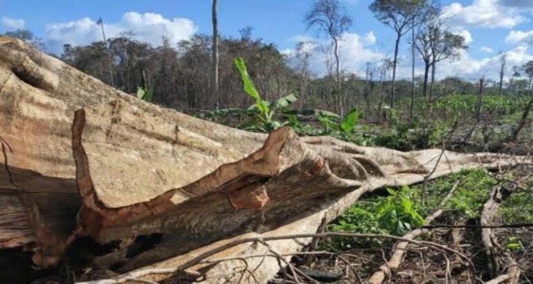 FATAL: Trabalhador morre após ser atingido por árvore durante derrubada