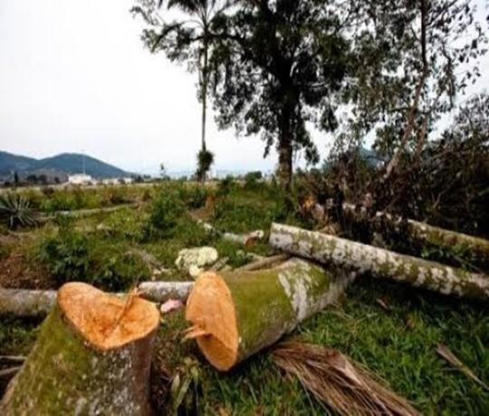 TRÁGICO: Trabalhador morre após ser atingido por árvore durante derrubada