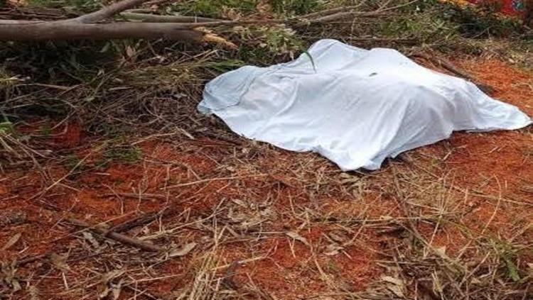 FATALIDADE: Trabalhador é contratado para derrubar árvores e acaba morto esmagado