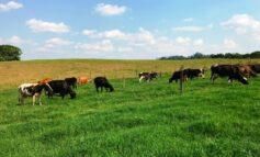 Na Região do Café, bovinocultura leiteira movimentou mais de R$ 50 milhões em 2020