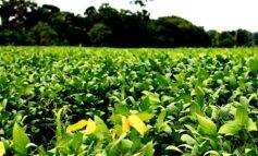 Agronegócio de Rondônia avança e bate recordes de exportação e produção agrícola em 2020