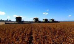 Município de Corumbiara passa Vilhena e é o maior produtor de soja de Rondônia