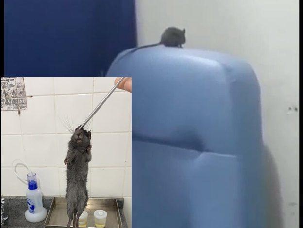 MP recomenda providências sobre denúncia da existência de roedores em Hospital de Vilhena