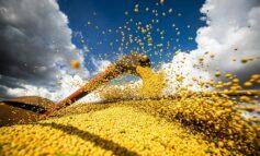 Áreas plantadas com grãos em Rondônia devem expandir 10,1% em 2021, aponta Conab