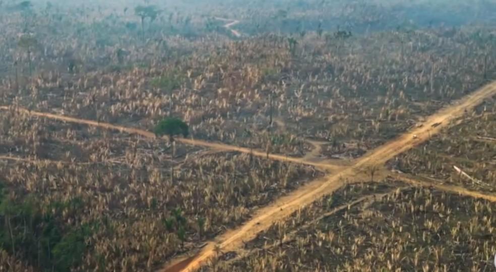 Flagrante de desmatamento na reserva Jaci-Paraná — Foto: Globo/Reprodução
